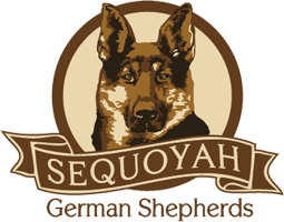 Sequoyah German Shepherds