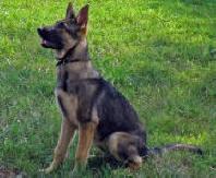 KiKi at 6 months