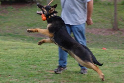 Picturesofthedogs088 1